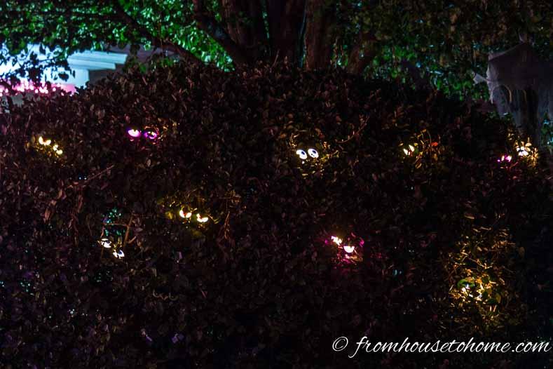 Blinking eyes in a bush make spooky Halloween outdoor lighting