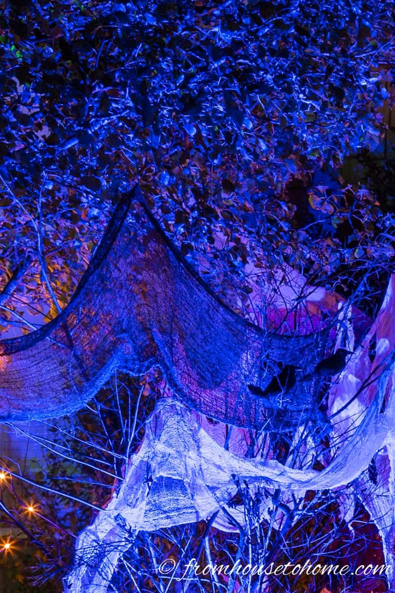 Trees and creepy cloth with a blue up light for Halloween